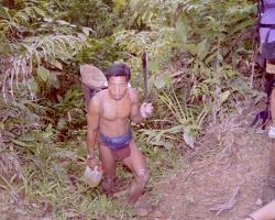 Friends in the jungle